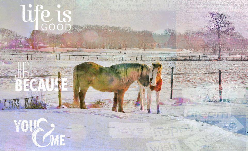 Wie Pferde sich warmhalten