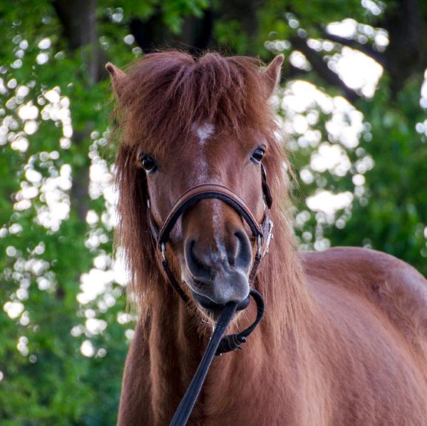 Hofur Horsenality