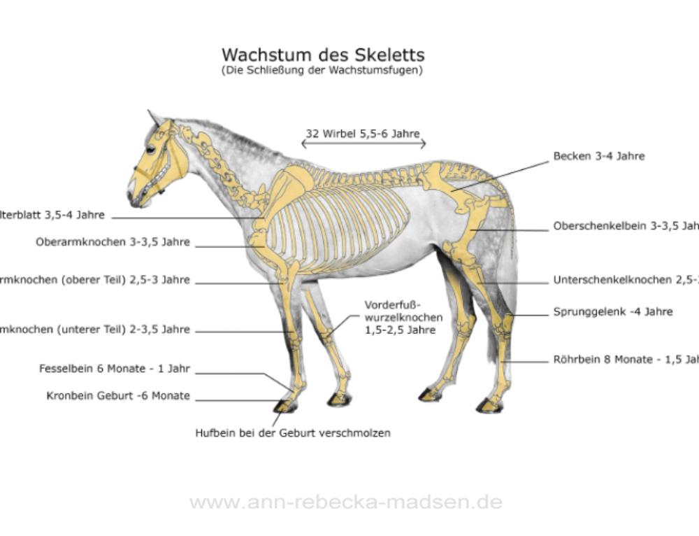 Warum es wichtig ist, dem Pferd vor Ausbildungsbeginn Zeit zu geben