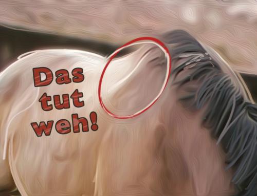 Ja, dein Sattel tut deinem Pferd weh!