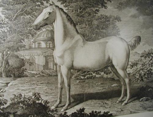 Condé – das letzte königliche Leibreitpferd